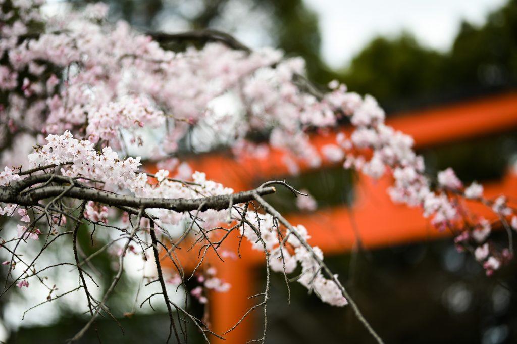 桜と共に撮影🌸