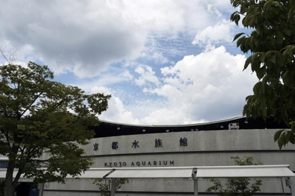 雨の日でも大丈夫!着物で訪れたい京都水族館の魅力