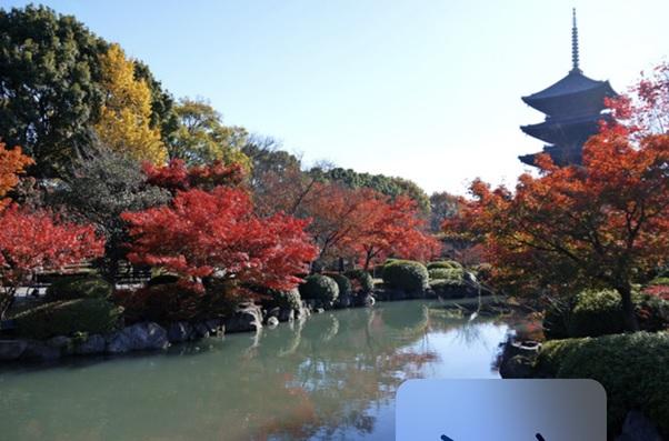 【着物で拝観】東寺の五重塔は写真映え抜群!