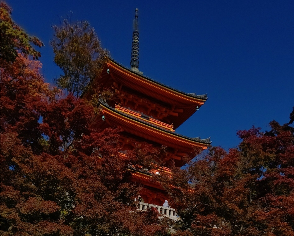 清水寺紅葉が色付き始めました!