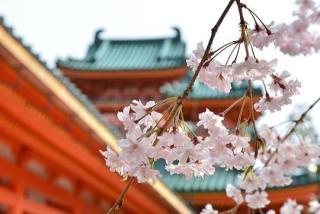 春🌸桜🌸パフェ🌸🌸